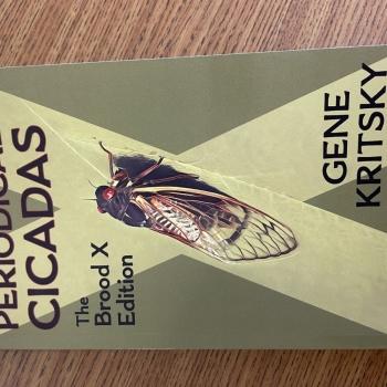 Cicada Mania 6